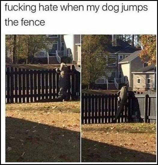 Property - fucking hate when my dog jumps the fence