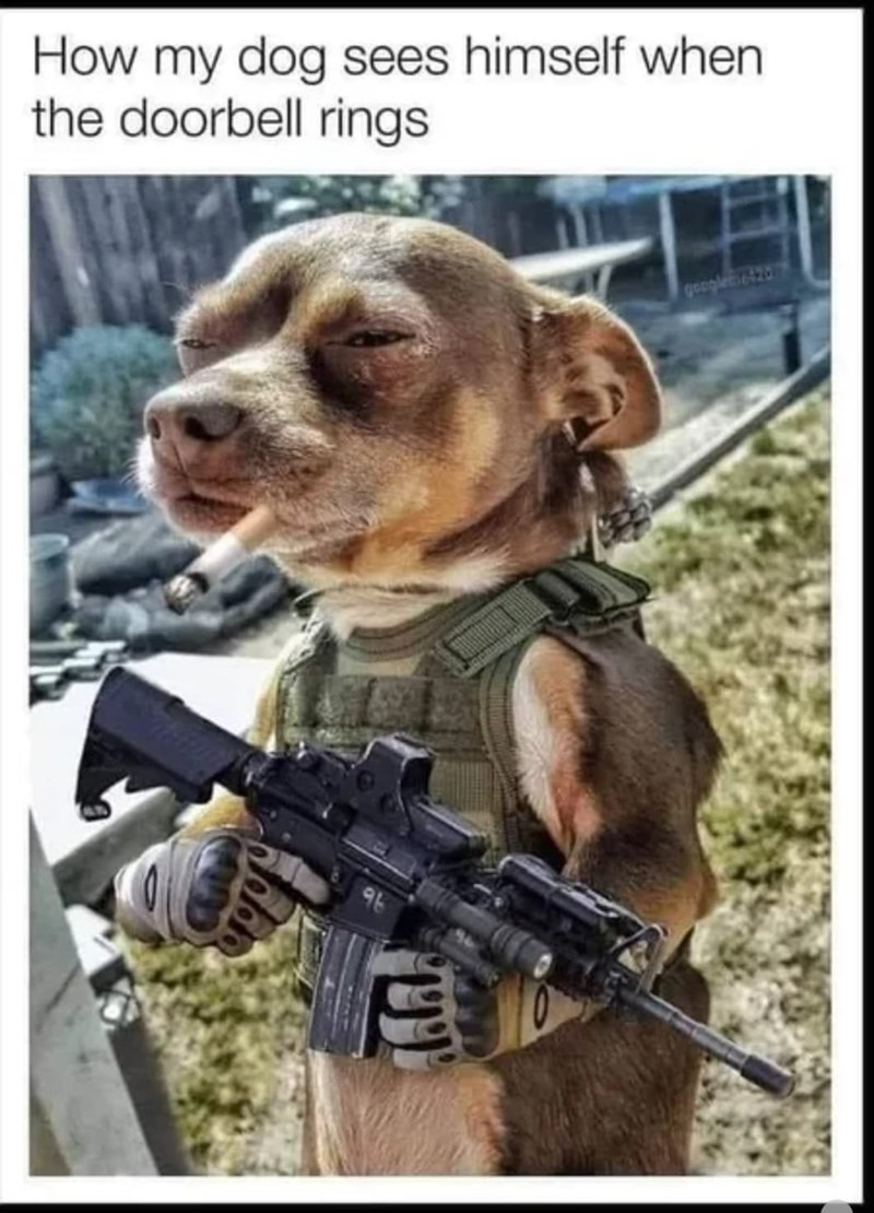 Dog - How my dog sees himself when the doorbell rings googletic420 9b