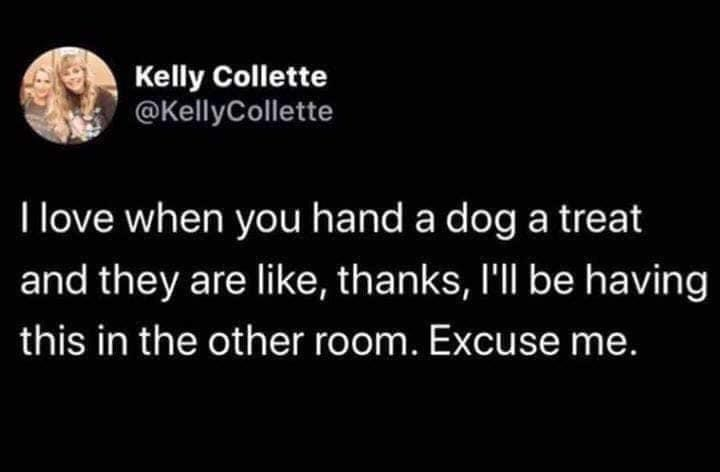 Organism - Kelly Collette @KellyCollette I love when you hand a dog a treat and they are like, thanks, I'll be having this in the other room. Excuse me.