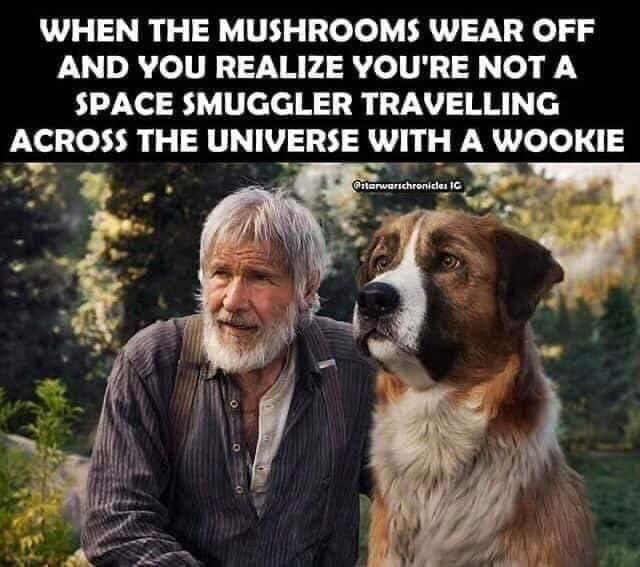 Dog - WHEN THE MUSHROOMS WEAR OFF AND YOU REALIZE YOU'RE NOT A SPACE SMUGGLER TRAVELLING ACROSS THE UNIVERSE WITH A WOOKIE Qtarwarschronides 1C