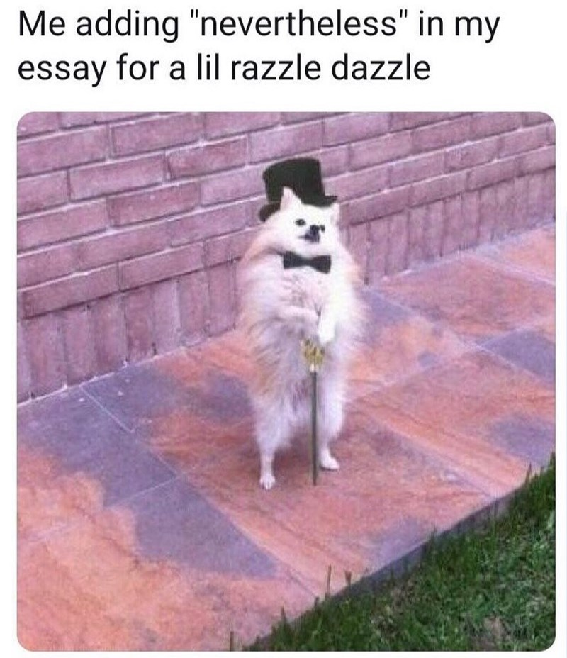 """Dog - Me adding """"nevertheless"""" in my essay for a lil razzle dazzle"""
