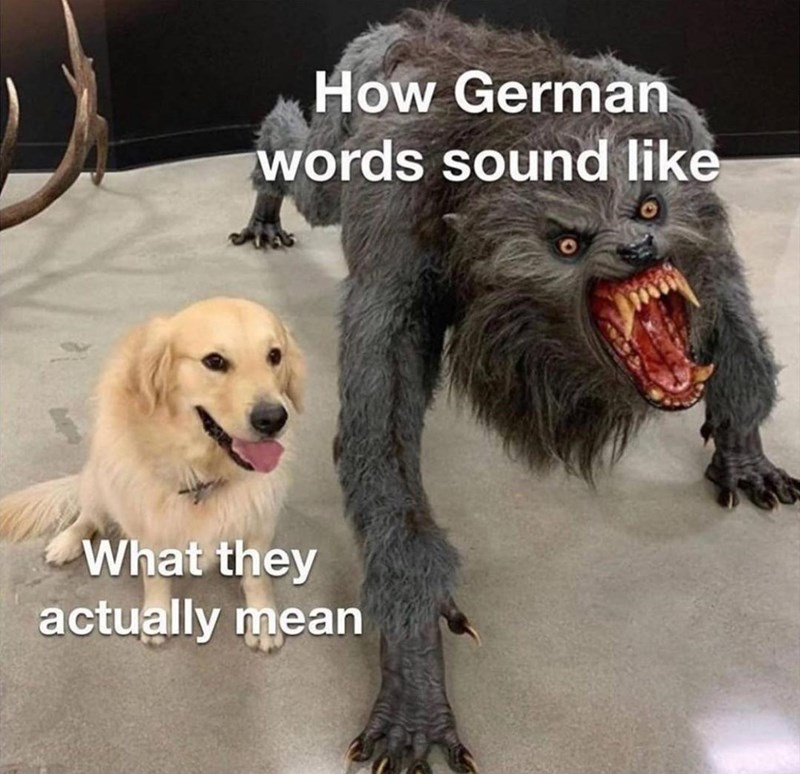 Dog - How German words sound like What they actually mean