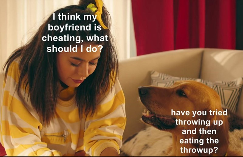 Dog - 1 think my boyfriend is cheating, what should I do? have you tried throwing up and then eating the throwup?