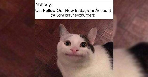 Nobody Us: Follow Our New Instagram Account @lCanHasCheezburgerz | very polite cat