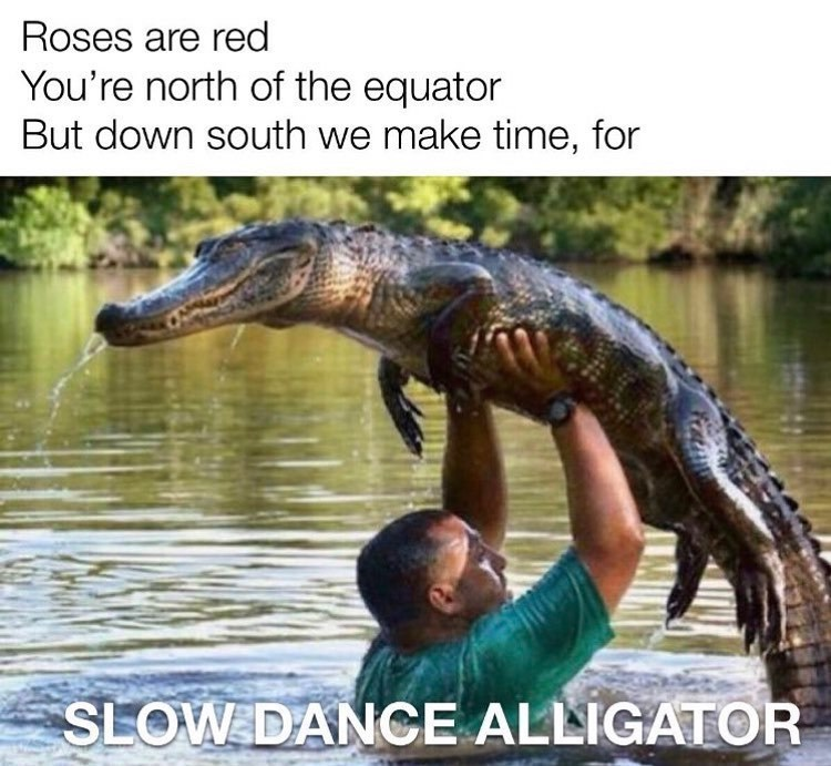 Water - Roses are red You're north of the equator But down south we make time, for SLOW DANCE ALLIGATOR