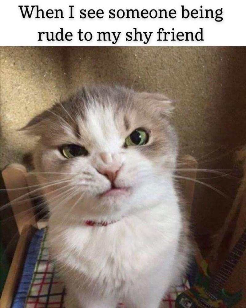 Cat - When I see someone being rude to my shy friend