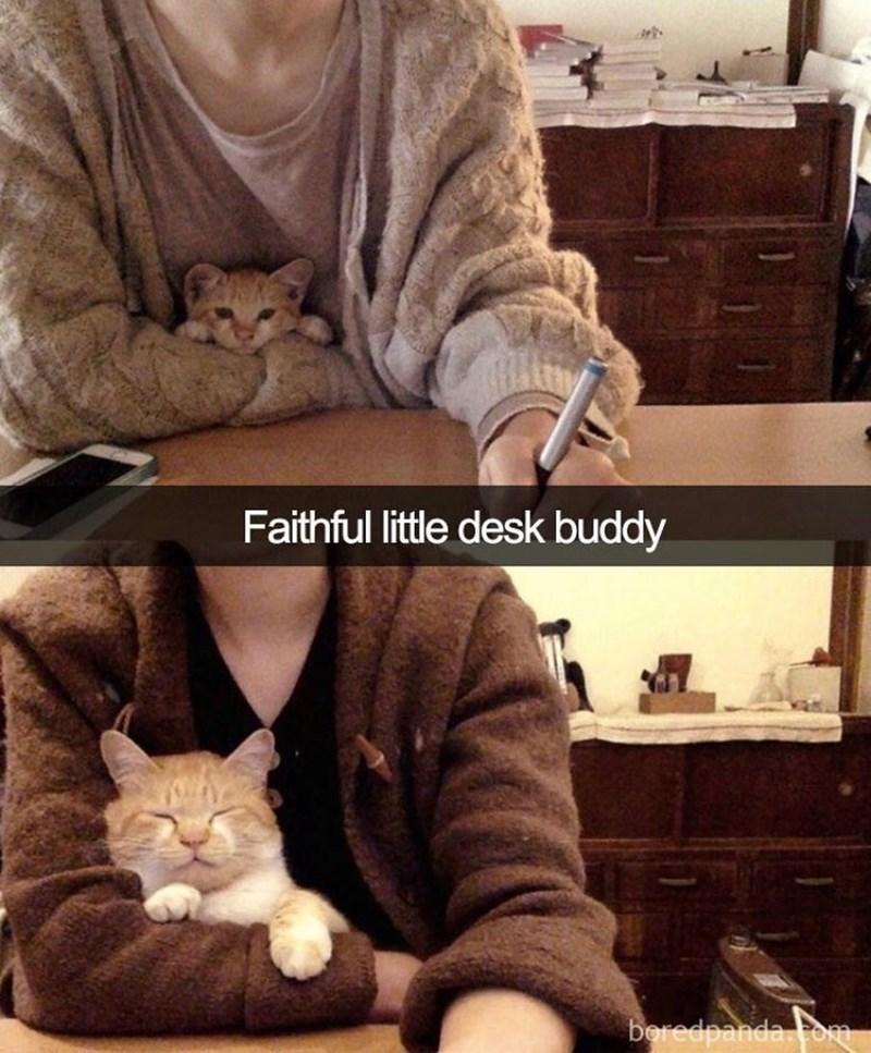 Cat - Faithful little desk buddy beredpanda.Fom