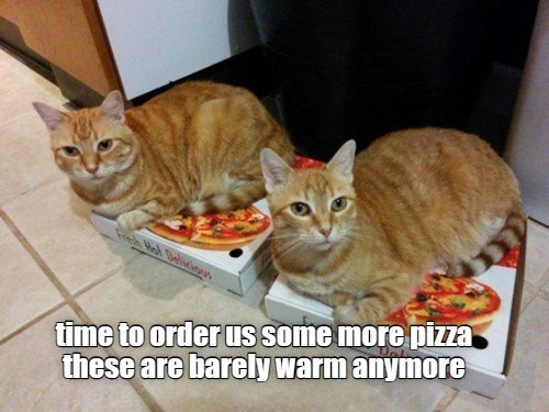 time to order us some more pizza these are barely warm anymore | funny pic two cats sitting on top of two pizza boxes