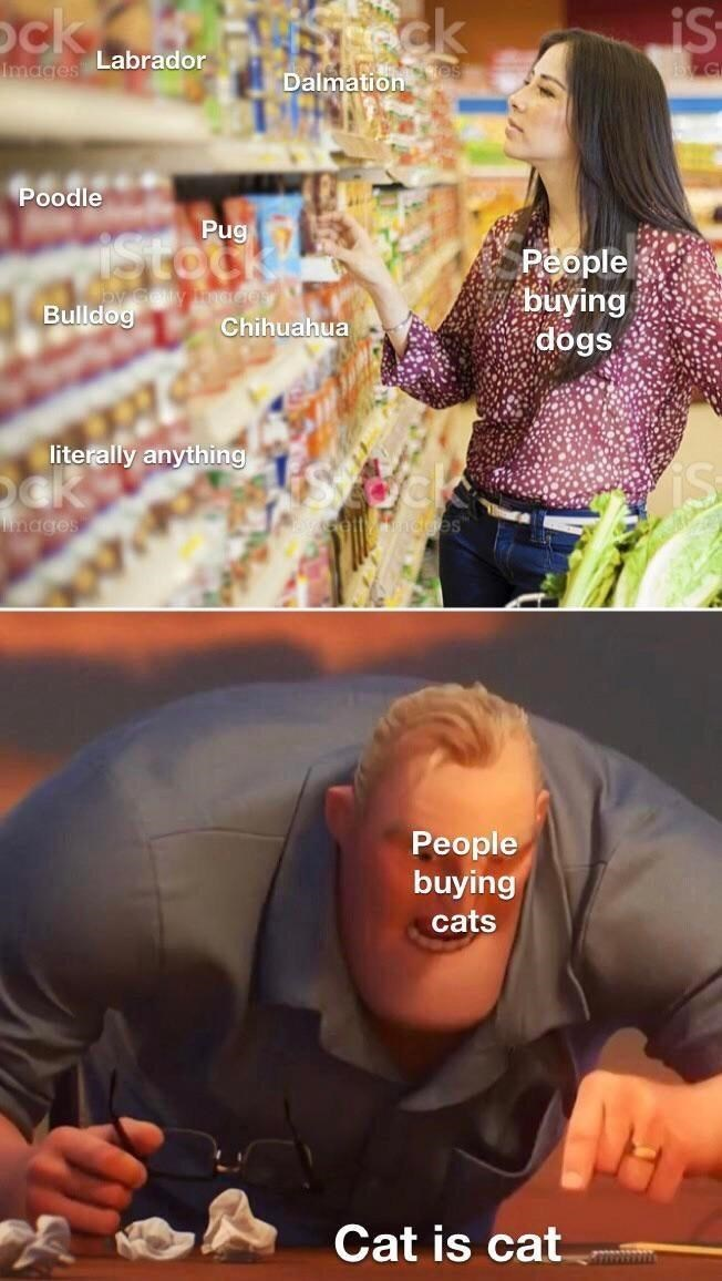 Photograph - ock sck Labrador iS Images Dalmation Poodle Pug Stoc People buying dogs Bulldog Chihuahua literally anything is mages Ridges™ People buying cats Cat is cat