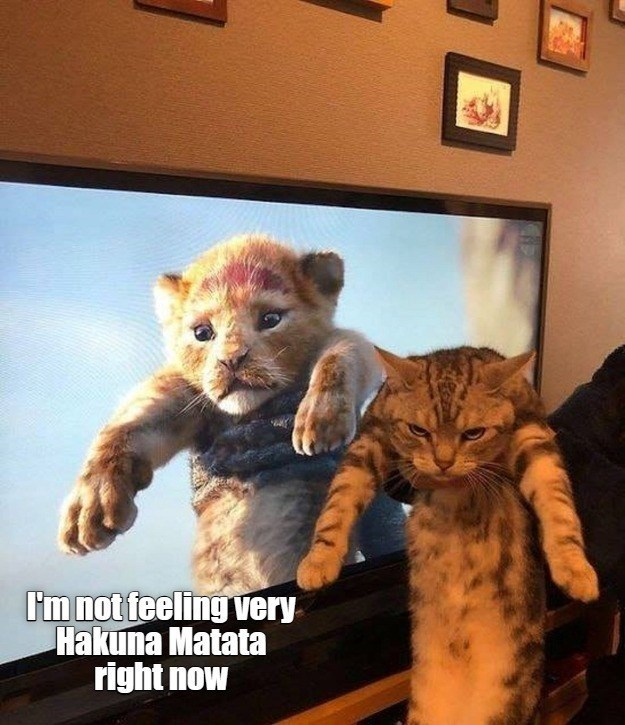I'm not feeling very Hakuna Matata right now   holding up a grumpy cat next to a tv showing a scene from the lion king