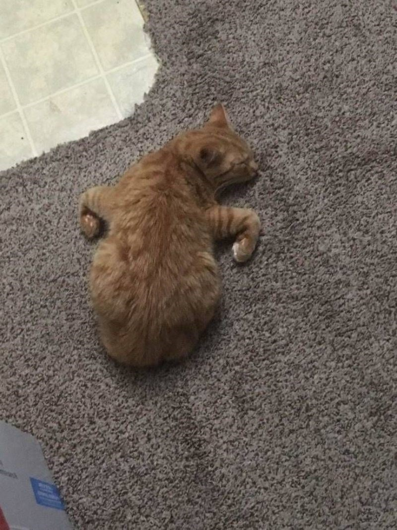 funny pic of an orange cat sleeping on the floor in a weird position