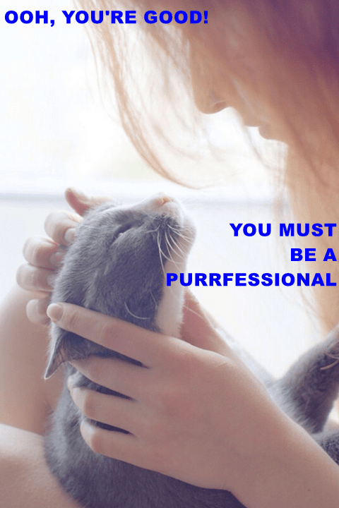 OOH, YOU'RE GOOD! YOU MUST PURRFESSIONAL   funny pun professional cute pic of a kitten getting pet