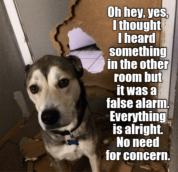 Oh hey, yes, I thought I heard something in the other room but it was a false alarm. Everything is alright No need for concern. | dog standing in front of a door with a hole chewed through it