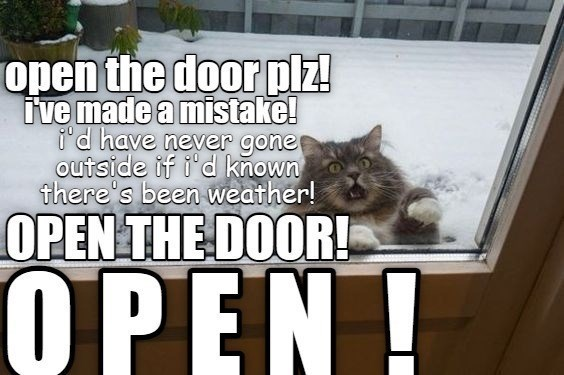 open the door plz! i've made a mistake i'd never gone outside if i'd known there's been weather open the door   hysterical cat looking through a glass door