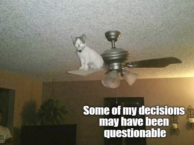 Some of my decisions may have been questionable   cat sitting on a ceiling fan