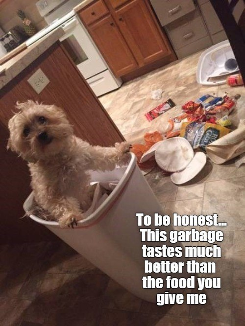 To be honest This garbage tastes much better than the food you give me | funny pic of a dog peeking out of a trash can with all the trash spilled outside