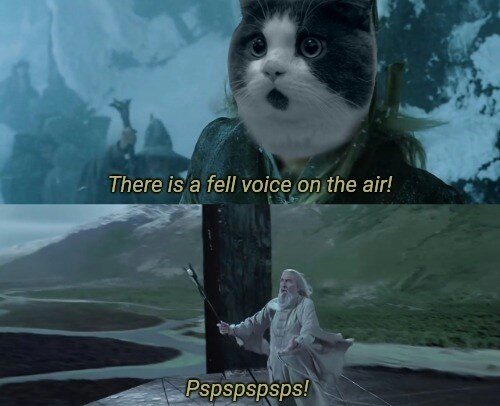 Cat - There is a fell voice on the air! Pspspspsps!