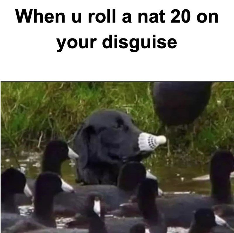 Water - When u roll a nat 20 on your disguise