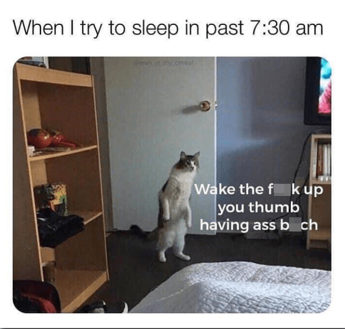 Font - Cat - When I try to sleep in past 7:30 am elean in my.cereal Wake the f k up you thumb having ass b ch