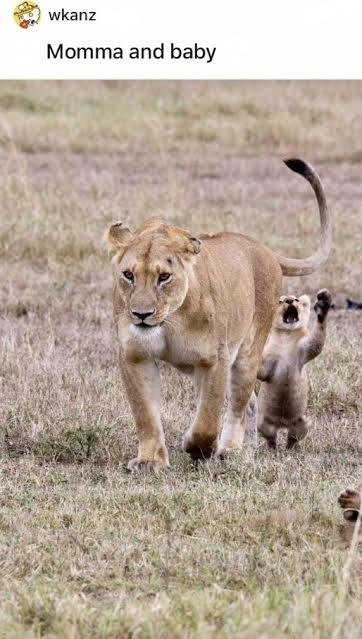 Ecoregion - wkanz Momma and baby