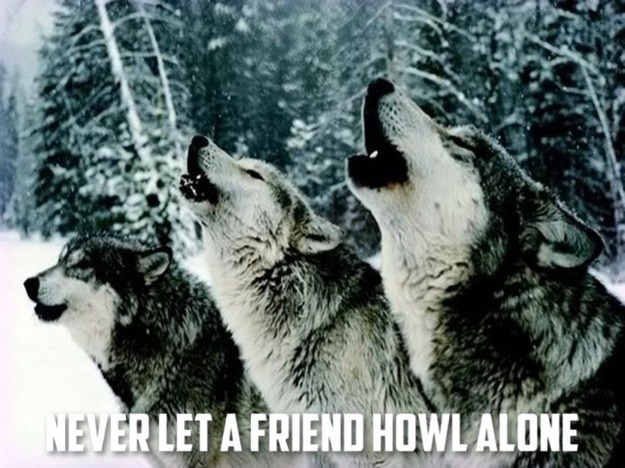 NEVER LET A FRIEND HOWL ALONE | three wolves howling