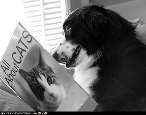 "funny pic of a dog reading a book titled ""all about cats"""