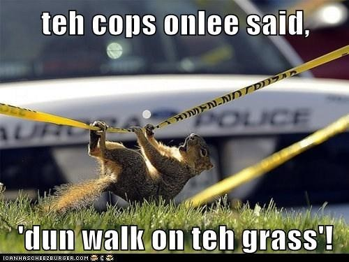 the cops only said don't walk on the grass | funny pic of a squirrel hanging from a police tape