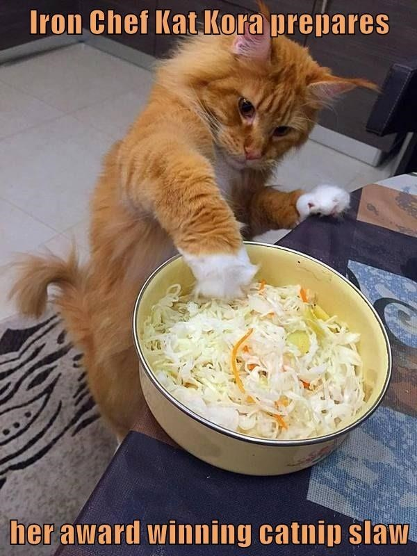 Iron Chef Kat Kora prepares her award winning catnip slaw   funny pic of an orange cat putting its paw in a bowl of coleslaw