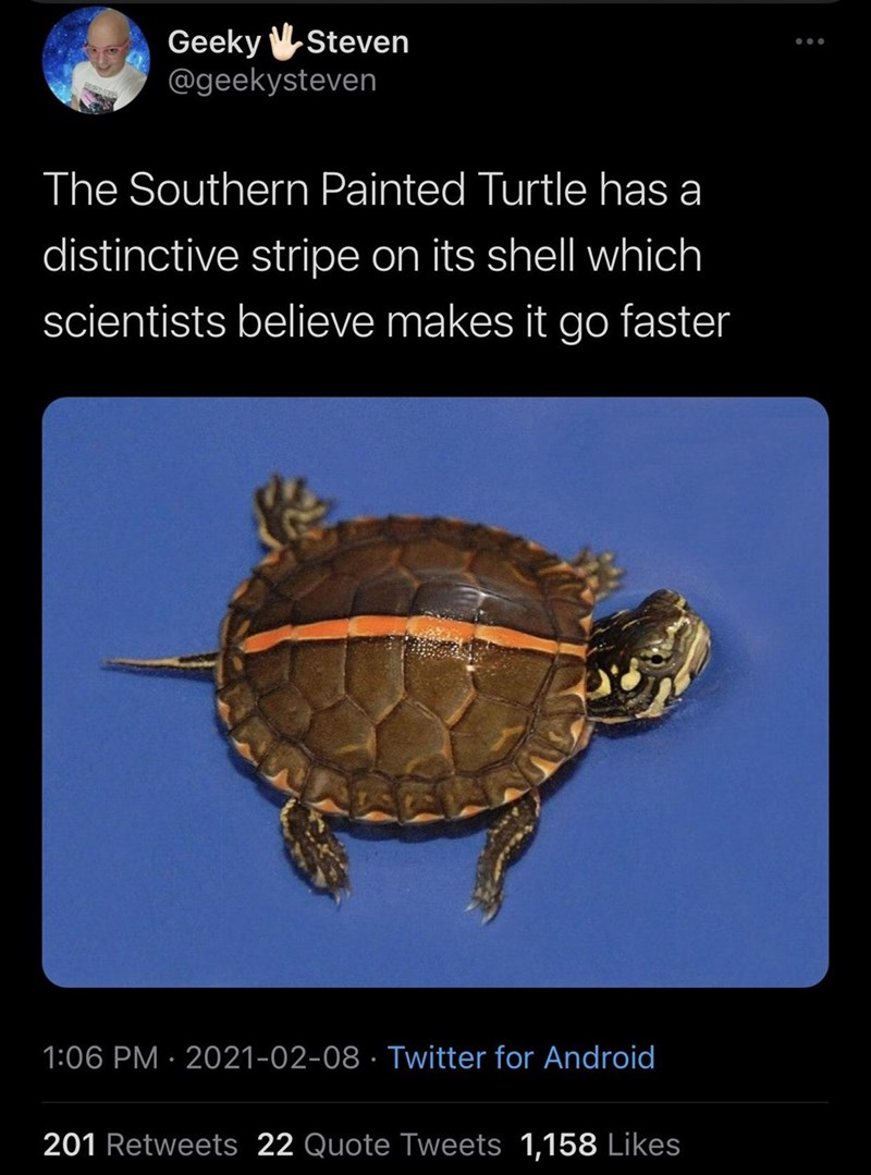 Reptile - Geeky VSteven @geekysteven The Southern Painted Turtle has a distinctive stripe on its shell which scientists believe makes it go faster 1:06 PM · 2021-02-08 · Twitter for Android 201 Retweets 22 Quote Tweets 1,158 Likes