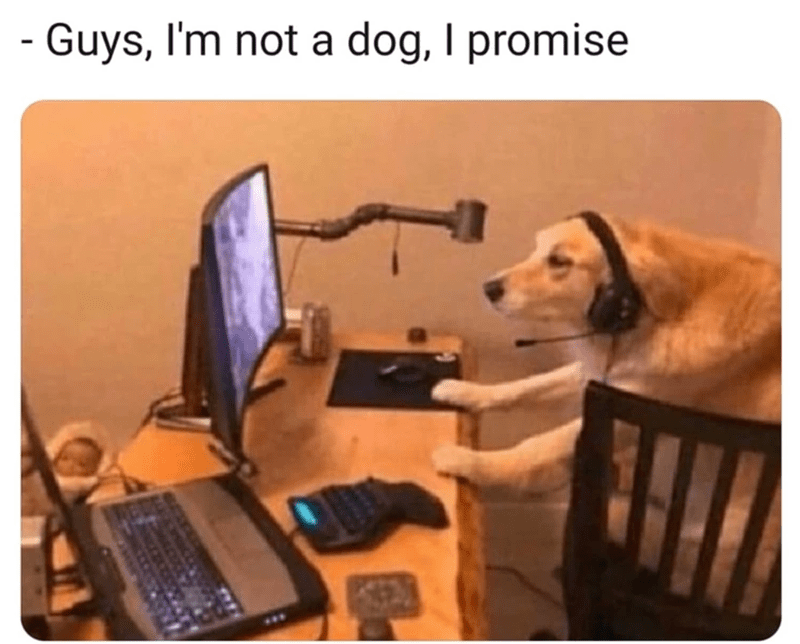 funny memes, memes, zoom, dog memes | Guys, I'm not a dog, I promise dog playing on a computer