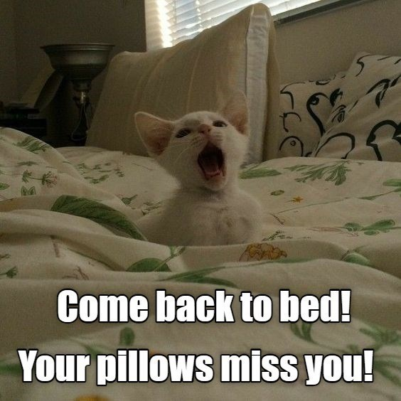 Come back to bed! Your Pillows miss you! | adorable white kitten screaming in bed