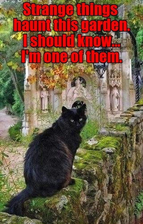 strange things haunt this garden i should know i'm one of them | pic of a black cat in a spooky garden