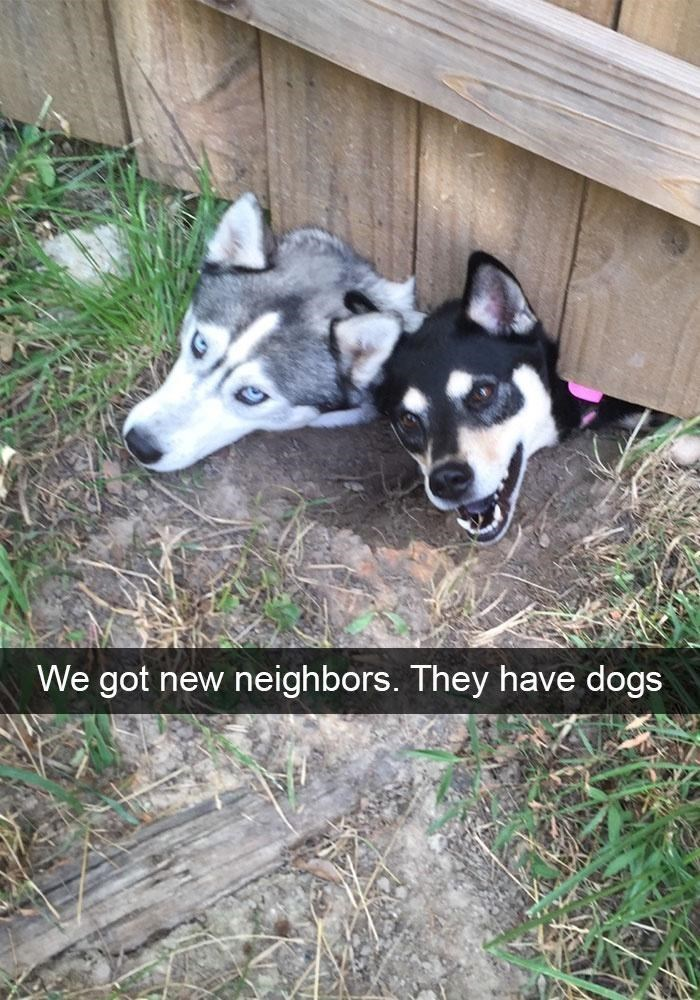 Dog - We got new neighbors. They have dogs