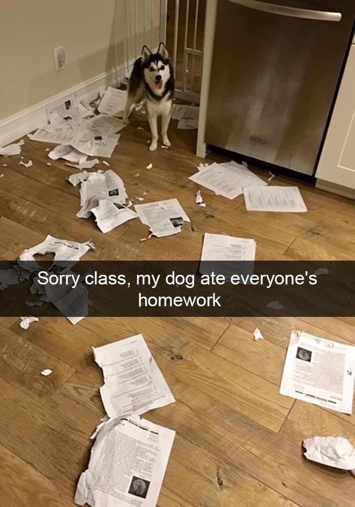 Dog - Sorry class, my dog ate everyone's homework