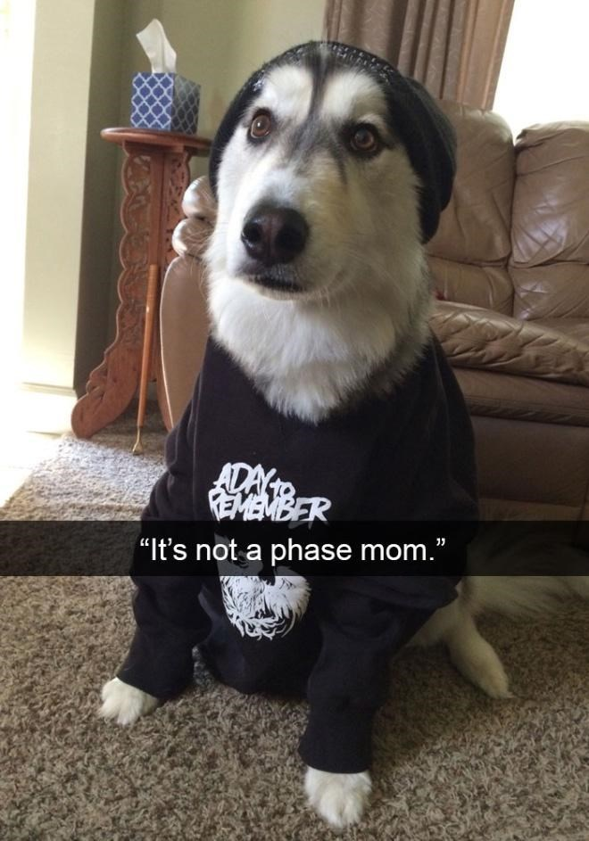 """Dog - ADAY EBER """"It's not a phase mom."""""""