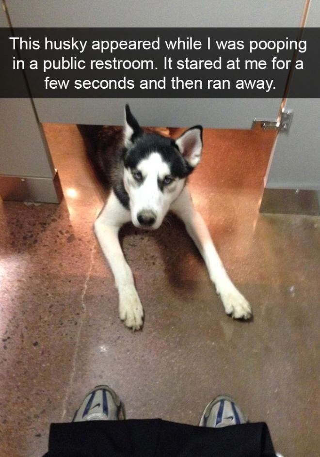 Dog - This husky appeared while I was pooping in a public restroom. It stared at me for a few seconds and then ran away.