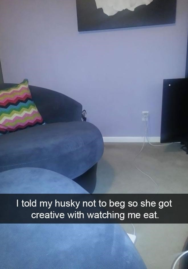 Couch - I told my husky not to beg so she got creative with watching me eat.