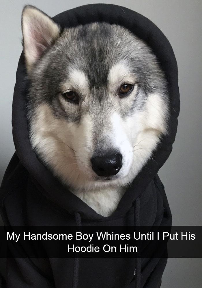 Dog - My Handsome Boy Whines Until I Put His Hoodie On Him