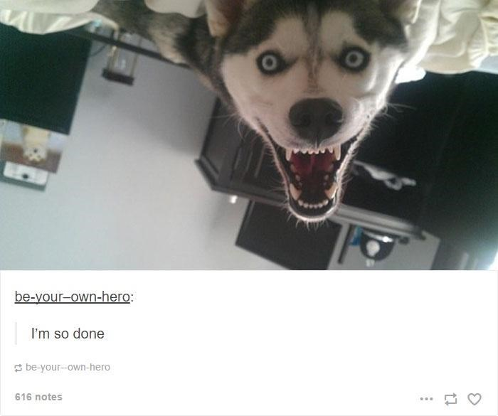 Dog - be-your-own-hero: I'm so done E be-your-own-hero 616 notes