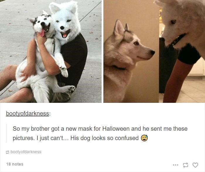 Dog - bootyofdarkness: So my brother got a new mask for Halloween and he sent me these pictures. I just can't... His dog looks so confused e s bootyofdarkness 18 notes ...