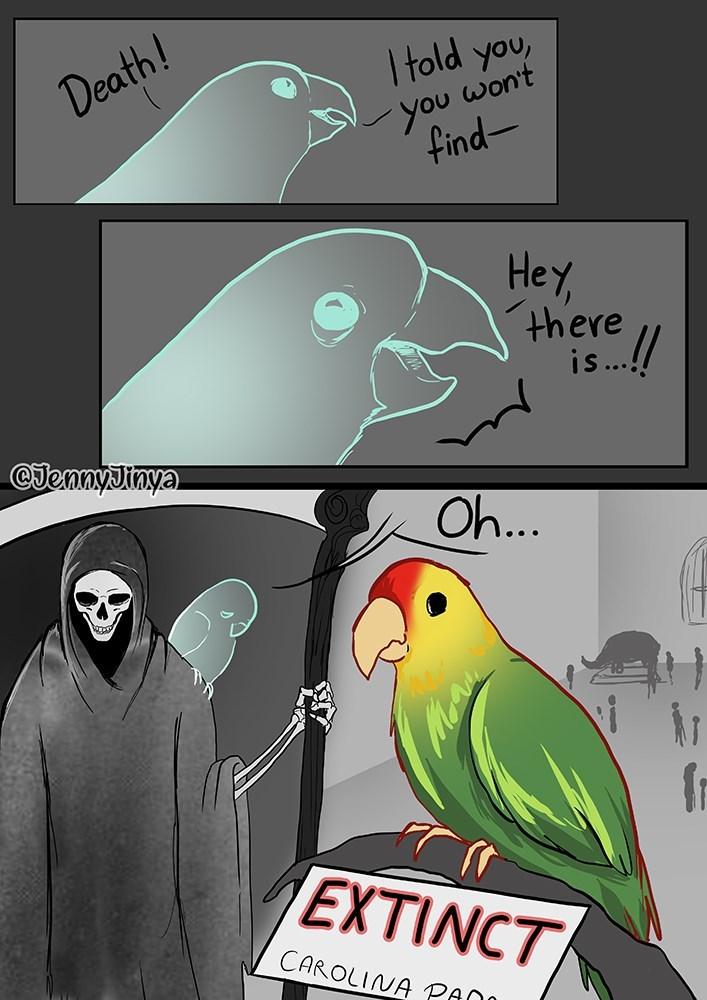 Bird - I told you, won't you find- Death! Hey there is.!/ CJennyJinya Oh.. EXTINCT CAROLINA PANN