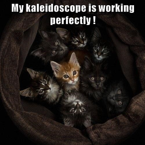 My kaleidoscope is working perfectly | a bunch of adorable kittens wrapped in a blanket looking up in the same direction