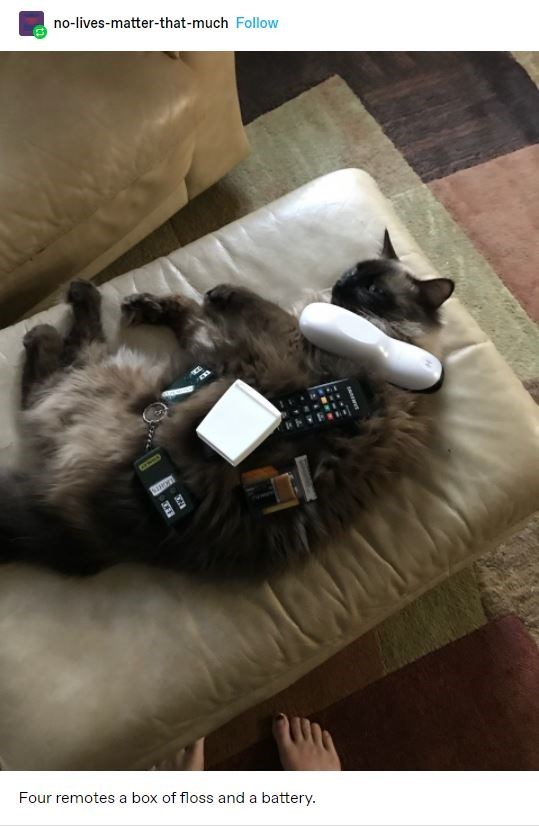 Felidae - no-lives-matter-that-much Follow Four remotes a box of floss and a battery.
