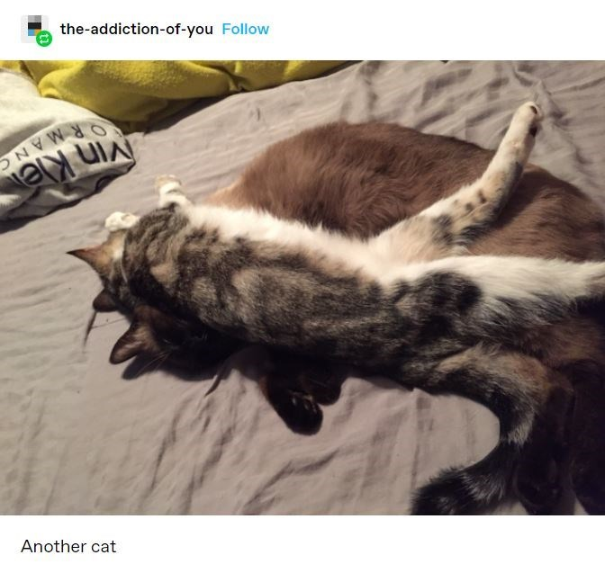 Cat - the-addiction-of-you Follow ORMANC VIn Kle Another cat