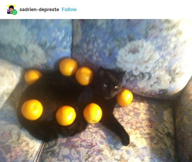 Organism - sadrien-depreste Follow