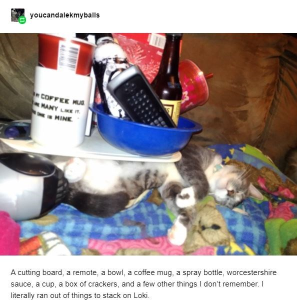 Water bottle - youcandalekmyballs COFFEE MUS HANY LIKE T. MINE A cutting board, a remote, a bowl, a coffee mug, a spray bottle, worcestershire sauce, a cup, a box of crackers, and a few other things I don't remember. I literally ran out of things to stack on Loki.