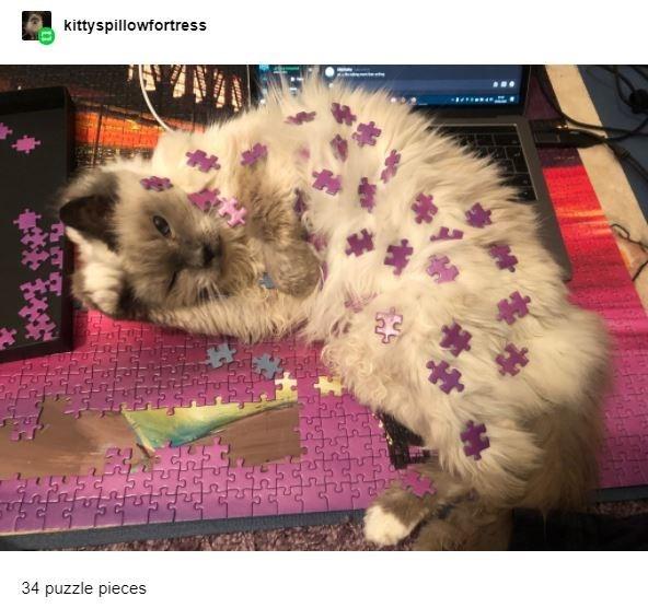 Vertebrate - kittyspillowfortress 34 puzzle pieces