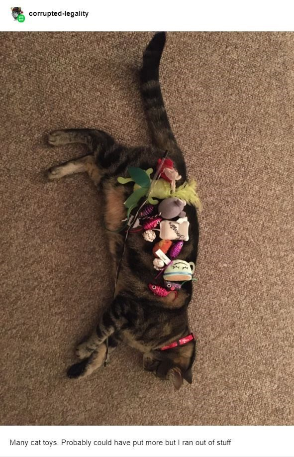 Dog - corrupted-legality Many cat toys. Probably could have put more but I ran out of stuff