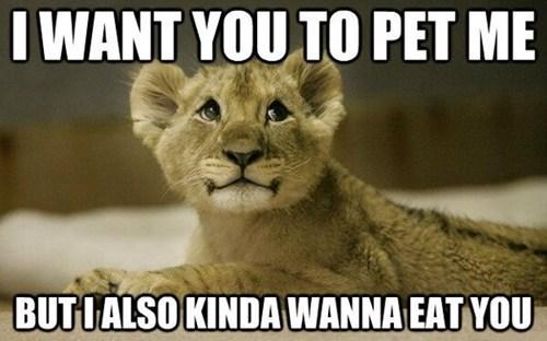 I WANT YOU TO PET ME BUT I ALSO KINDA WANNA EAT YOU | cute lion cub with big shiny eyes