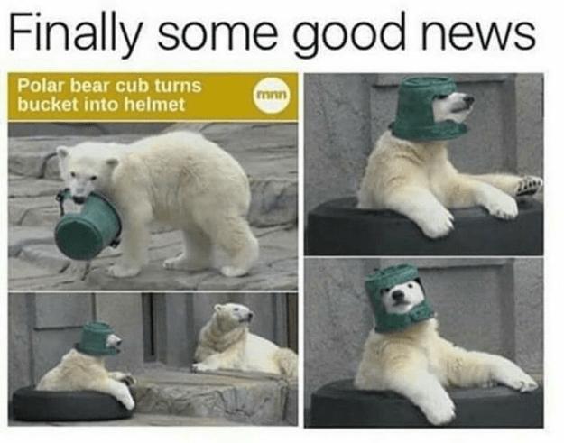 Finally some good news Polar bear cub turns bucket into helmet